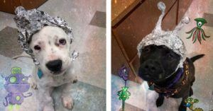 """Worried About Area 51 Aliens? Rescuers Invite You To """"Storm The Shelter""""!"""