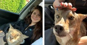 Woman Is Stunned When She Realizes She Just Rescued A Coyote