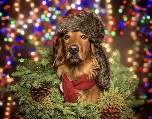 Holiday Hazards for Dogs