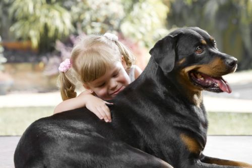 A Quick Guide For Rottweiler Breeders