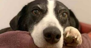 Border Collie Finally Goes Home After 10 Years In A Shelter