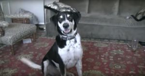 Impatient Dog Won't Stop Telling His Dad He Wants A Kitten