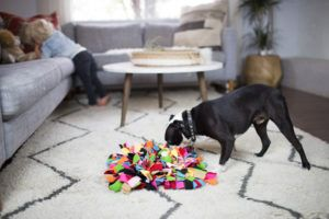 Stuck Inside Due To The Weather? Treat Your Pup To This Super Stimulating Dog Activity!