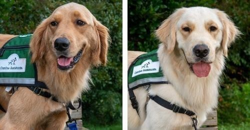 Two Service Pups Are Bringing Full Time Joy To Sick Children & Their Families