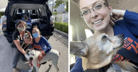 Family Travels Across Country To Reunite With Dog They Lost 6 Years Ago