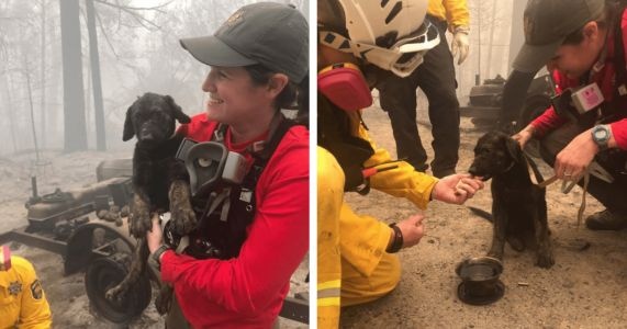 "Meet ""Trooper,"" The Puppy Pulled From Wildfire Rubble"