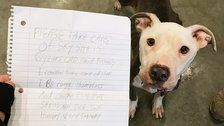 Shelter Takes In Dog Found With Heartbreaking Note Saying Owner Couldn't Feed Her