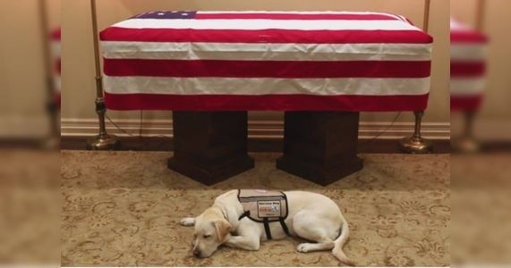 Presidential Service Dog Sully H.W. Bush Honored With Bronze Statue