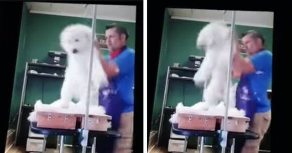 Dog Groomer Arraigned After Horrific Video Shows Him Abusing Poodle