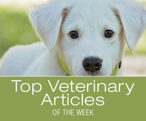 Top Veterinary Articles of the Week: Is Inflammation a Friend or Foe? New Fatty Acid to Help with Allergies, and more
