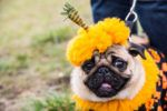 2019 Dog-Friendly Halloween Events: Halloween Dog Parades and More!