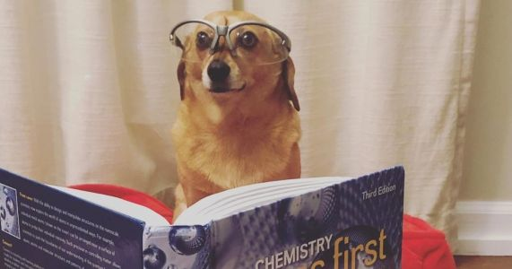 Shhh: These 17 Dogs Are Trying To Study!