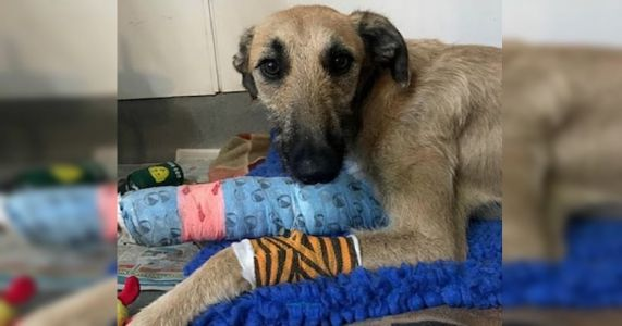 Dog With Broken Leg Tied Up And Abandoned At Bus Stop
