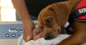 Loyal Dog Lays By His Sick Owner's Side Until The Very End