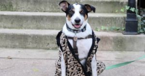 Dog Who Spent Most Of His Life In A Shelter Goes On A Ferris Bueller Adventure