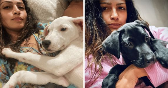 Matthew McConaughey and Camila Alves Adopt Two Puppies In One Week