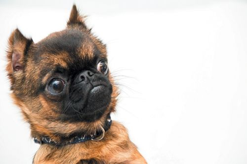 Why Is Your Dog's Stomach Making Noises? A Vet Weighs In