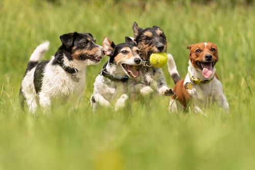 Internal Parasites in Dogs are on the Rise. Here's What It Means for You