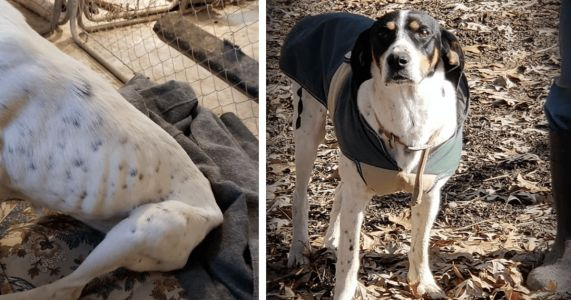 Starving Dog In Ditch Now Looks Better Than Ever Thanks To You