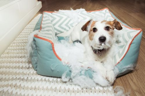 5 New Year's Resolutions For Your Dog