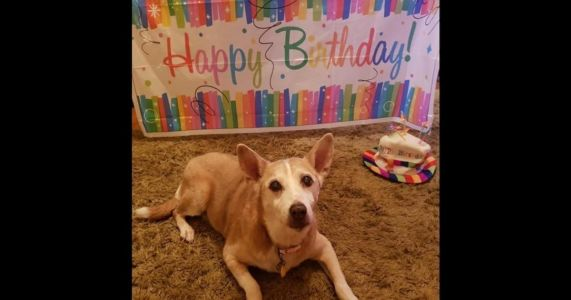 "UK's ""Wimpiest"" Shelter Dog Turns 16 In Her Forever Home"