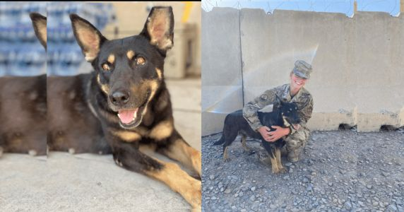 Homeless Dog Who Befriended Soldiers Needs Help Getting Home For The Holidays