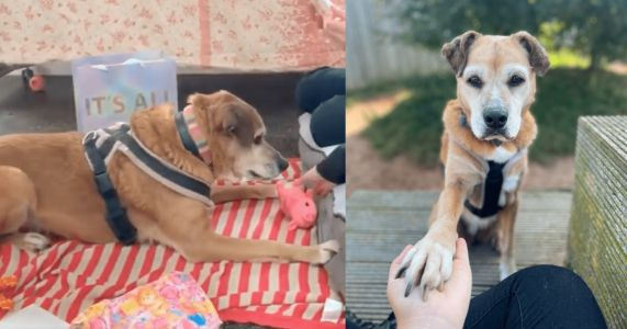 Molly Has Spent 11 Needless Years In A Shelter Waiting For A Home