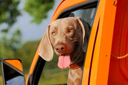 State Laws Require Pets To Be Restrained In Vehicles