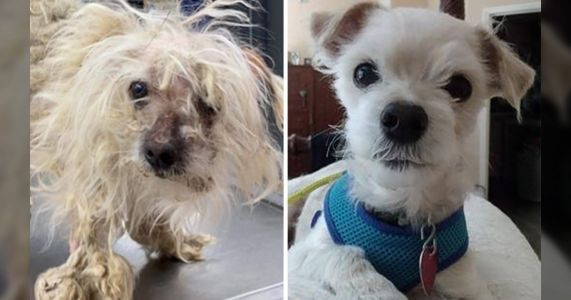 America's Top Shelter Dog Makeover Prize Goes To Matted, Neglected Dog Named Scruffy