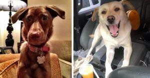 Two Missing Dog Cases Unite Their Communities With Very Different Results
