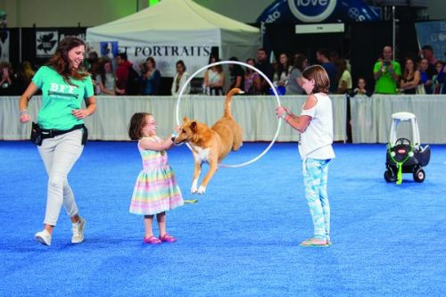 Dug Up at Dogster: June 2019 Dog Events