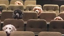 Very Good Service Dogs Watch 'Billy Elliot: The Musical' At The Theater
