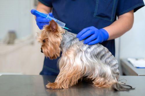 What Pet Parents Need to Know About Leptospirosis in Dogs