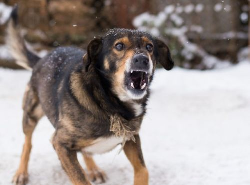 """Why """"Red Zone Dogs"""" Need Positive Reinforcement Training"""