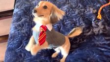 Adorable Dog Responding To Harry Potter Spells Is Pure Magic