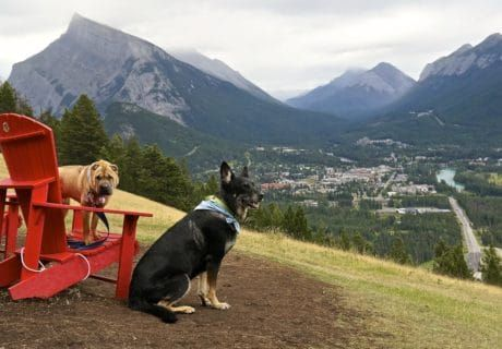 What Is It Like To Cross the Canadian Border With Your Pets?