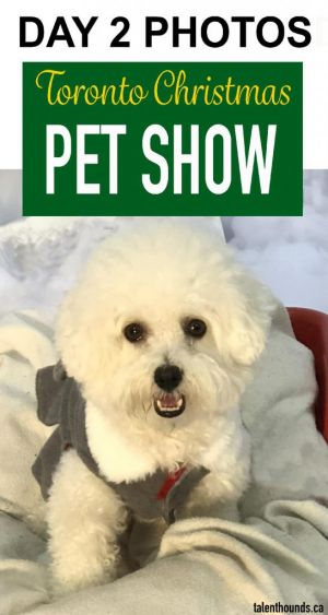 Just love these Day 2 Photos from Toronto Christmas Pet Show 2018