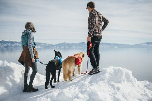 7 Essentials for Winter Hiking with your Dog