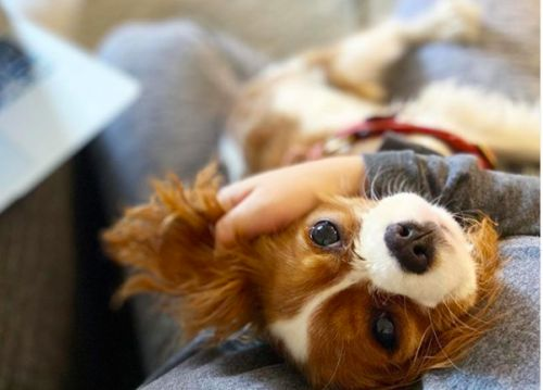 Periodontal Disease, Plaque, Gingivitis: All The Dental Terms Every Dog Parent Should Know