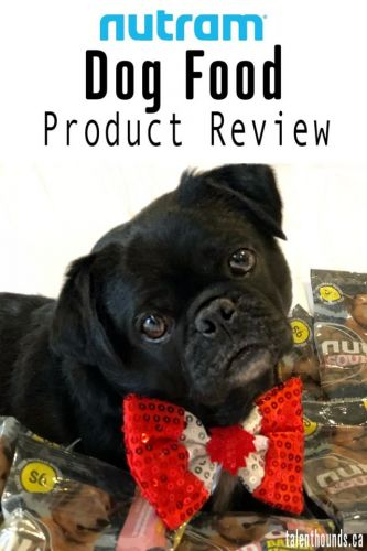 Is Nutram Dog Food Right for You and Your Dog?