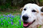 Celebrate National Pet Month with Your Dog!