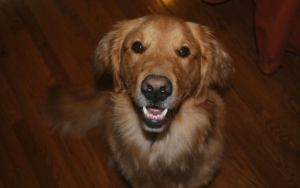 What's Going On When Your Dog Chatters Their Teeth?