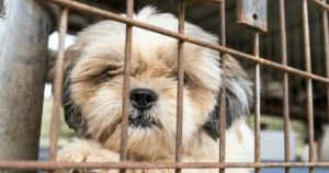 New York Senate Passes Bill To Help End Puppy Mills