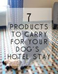 7 Products You Must Pack for a Hotel Stay with Your Dog