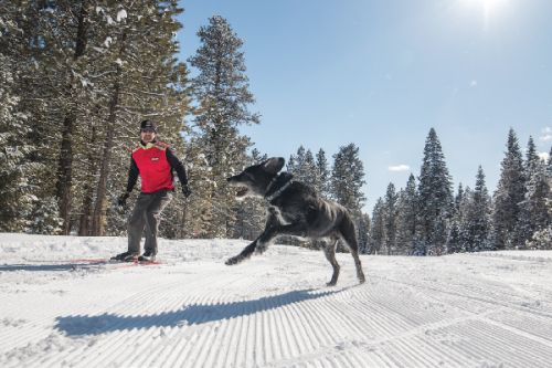 Winter Trips for Dogs and Dog Lovers