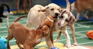 Puppy Bowl XVI Recruits Over 90 Adorable Adoptables
