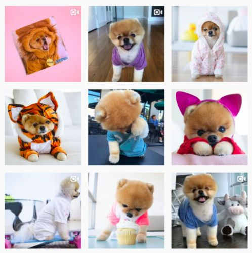 Is a Pomeranian the Right Dog Breed for Me?