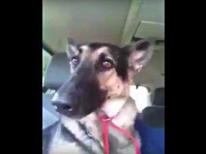 This Dog's Reaction To Hearing Her Favorite Song Is Priceless
