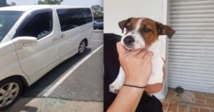 Police Smash Window To Save Puppy From Hot Car
