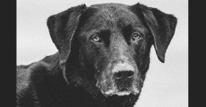 """Dog Diagnosed with Cancer Celebrates """"Bonus Days"""" and Inspires Others"""